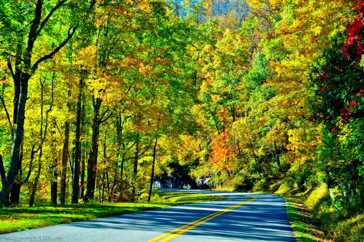 Autumn Road Less Traveled
